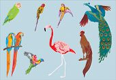 illustration with peacock, parrots, chickens, ducklings, rooster and flamingo