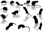 fourteen rodent silhouettes isolated on white background