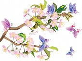 illustration with cherry tree flowers and butterflies on white background