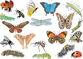 illustration with color insect collection on white