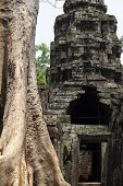 Old Tree In Ancient Temple Of Angkor Wat, Cambodia. Ancient Temple Stone Ruin In Siem Reap. Angkor W poster