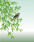 stock photo of nightingale  - Nightingale on a branch - JPG