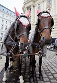 stock photo of stagecoach  - Horses waiting to whisk tourists around the beautiful city of Vienna - JPG