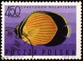Black-eye Butterflyfish (chaetodon Melapterus) On Post Stamp