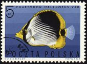 Striped Butterflyfish On Post Stamp