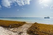 Punta Cana, Dominican Republic - June 17, 2018: : sargassum seaweeds on ocean beach in Bavaro, Punta poster