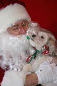 Dog With Santa 001