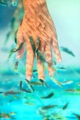 Manicure fish spa beauty treatment. Hand and finger skin care treatment in water with the fish rufa garra, also called doctor fish, nibble fish and kangal fish. Closeup.
