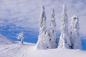 Snowy Landscape On Jahorina Mountain Near Sarajevo,