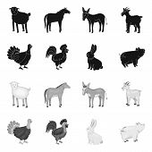 Vector Design Of Breeding And Kitchen Sign. Set Of Breeding And Organic Stock Vector Illustration. poster