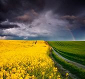 Ominous stormy clouds over fresh field with yellow rapeseed. Rural area in springtime. Exotic wallpa poster