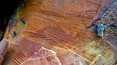 A Sawn-off Tree. The Texture Of The Wood. Cross Section Of Spruce And Larch Lumber. Close-up. Backgr poster