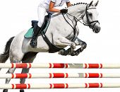 Girl Jumping With White Horse, Isolated Background. Equestrian Sports. Rider In Uniform Going To Jum poster