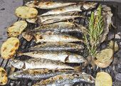 Fresh Mediterranean fishes on BBQ