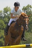 Woman Rider In Equestrian Race Jumps