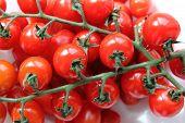 Tomaten-Hintergrund