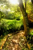 Painting Demarcated Tropical Hiking Path
