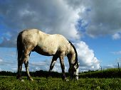 White Horse Browsing