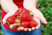 fresh strawberry in woman's hands