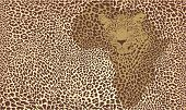 Fundo do Jaguar.eps Africano