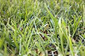 A Close Up View of Fresh Cut Green Grass. The Perfect image for all your Grass and Gardening needs.