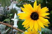 Sun Flower Gate