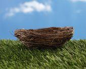 Empty nest on green grass