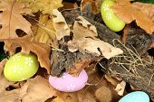 Easter eggs hidden in leaves