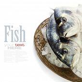 pescado fresco dorada sobre hielo - comida y bebida (con texto de muestra extraíble fácil)