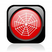 spider web black and red square web glossy icon