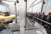 Brown bottles with  beer go on conveyor at  brewery. Label roll is spinning on left.