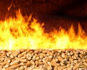 Combustion of biomass pellets with bright fire and flames