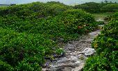 Coral Path Through Sea Grape