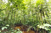 Stream winding through lowland tropical rainforest