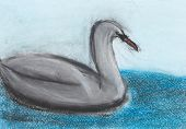 Children Drawing - Grey Swan
