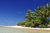 Deserted Island with Palm Trees