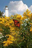 Cana Monarch