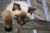 Cat's Violent Death Smashed In A Fence