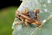 A small weevil (family Curculionidae)