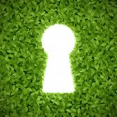 Green hedge with keyhole. Vector.