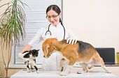 Meeting of dog with a kitten on a reception at the veterinary