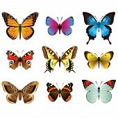 image of summer insects  - Vector collection of beautiful photo realistic butterflies - JPG