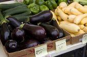 Eggplants, Squash, Cucumbers And Peppers