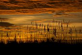 Florida beach grass sunset