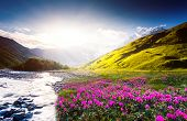 Fantastic sunset and bloom rhododendron at the foot of Tetnuldi glacier. Upper Svaneti, Georgia, Europe. Caucasus mountains. Beauty world.