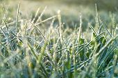 stock photo of low-light  - abstract background from a grass covered with hoarfrost - JPG