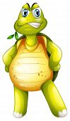 Illustration of a turtle standing alone on a white background