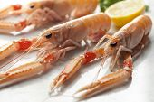 Claws of fresh raw langoustines