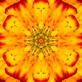 Yellow Concentric Flower Center Mandala Kaleidoscopic Design