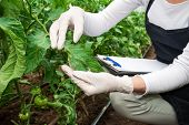 stock photo of summer insects  - Biotechnology woman engineer with a clipboard and pen examining a plant leaf for disease - JPG